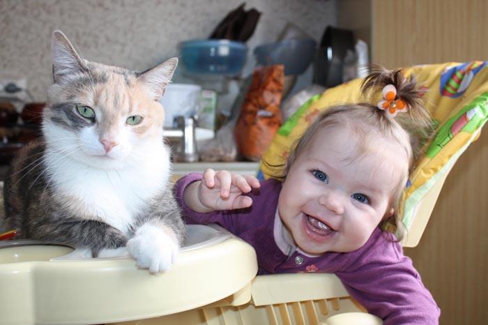 Кошки в моей жизни