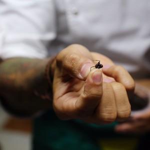 Бразильские муравьи, вполне съедобные